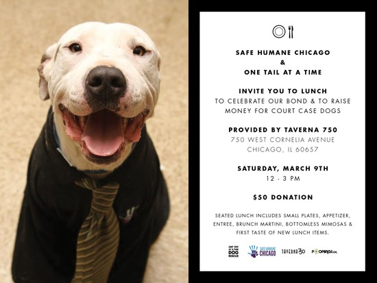 3/9/13 Luncheon benefiting Safe Humane Chicago and One Tail at a Time